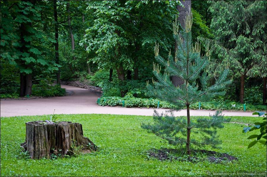 2010 р. Вид у парку