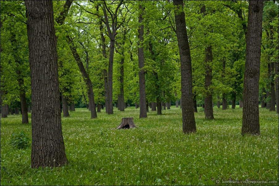 """Лісовий масив """"Дубинка"""" біля…"""