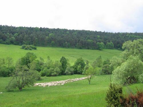 [2003..2006 р.] Колись тут було густо забудоване село