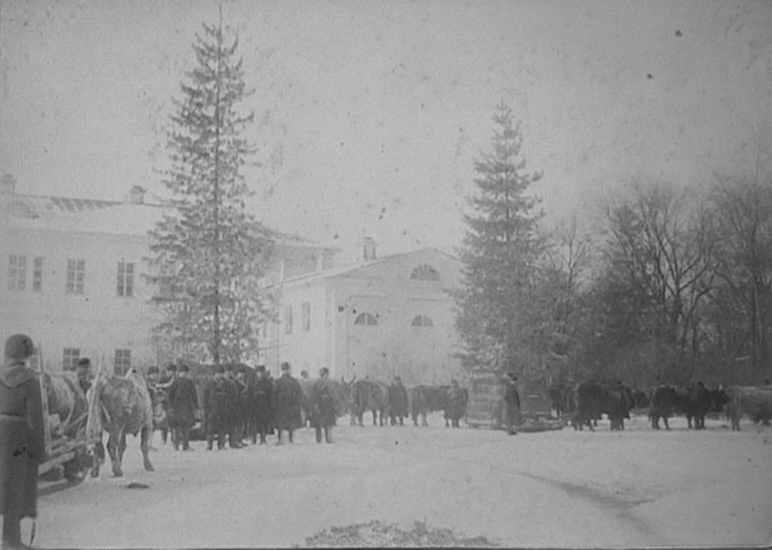1887 р. Перевезення кедрів з маєтку…