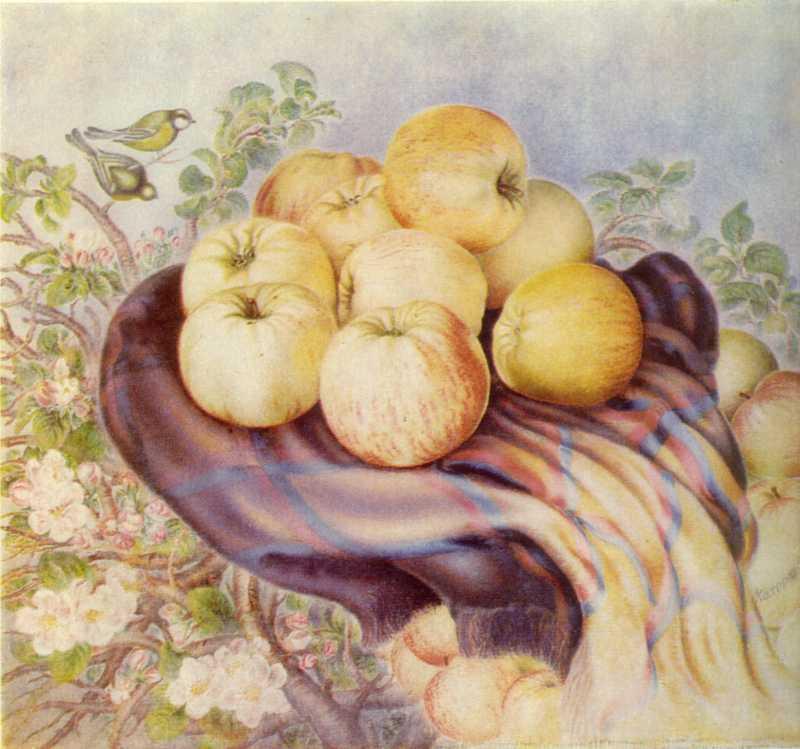 Білокур К.В. Богданівські яблука