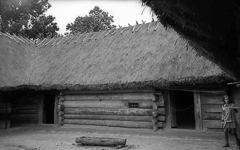 1977 р. Фрагмент двору