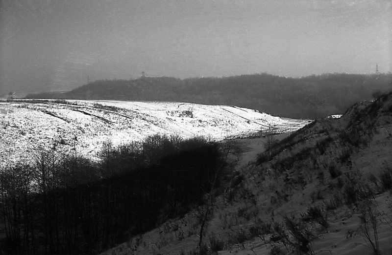 1977 р. Балка на північ від городища. Вигляд із заходу