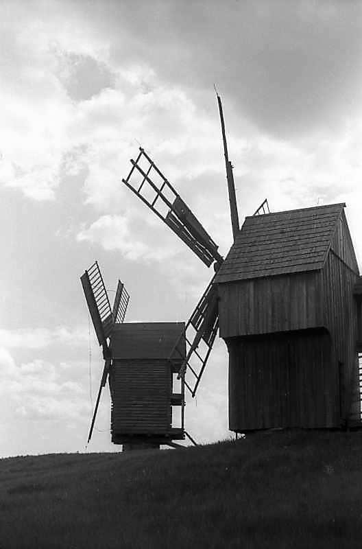 1978 р. Вітряки зі Скаргівки та Лівинець