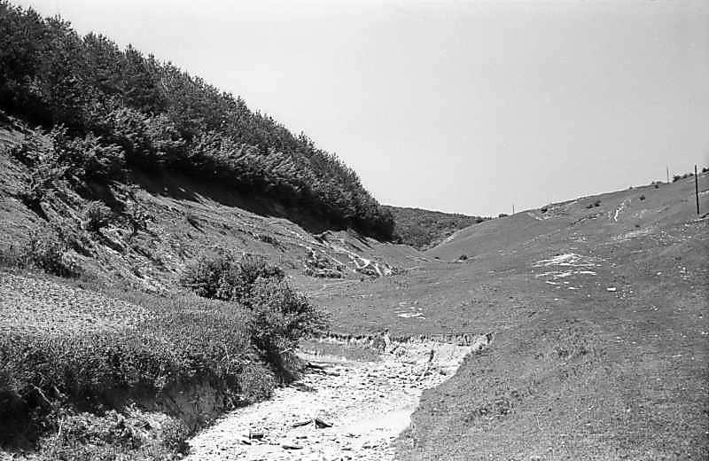 1978 р. Яр на захід від замку. Вигляд з південного сходу