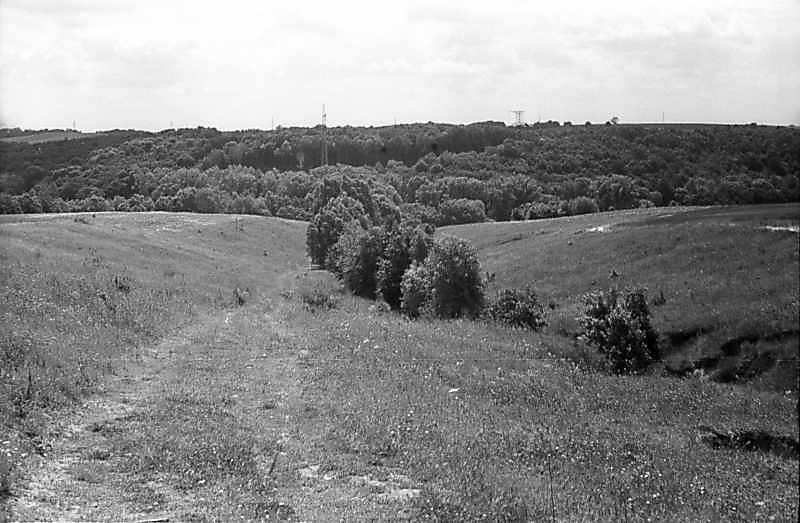 1978 р. Балочка на тлі лісу