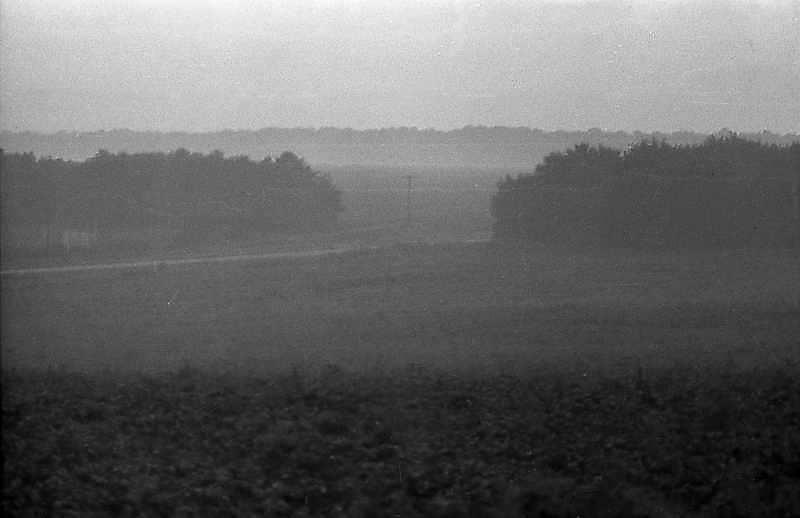 Краєвид з лісосмугами в ранковій млі