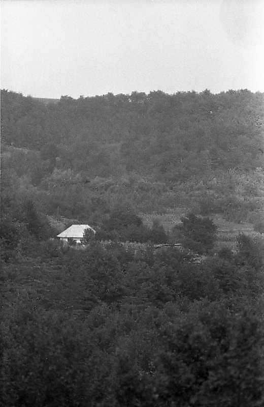 Краєвид з хатою в лісовій балці