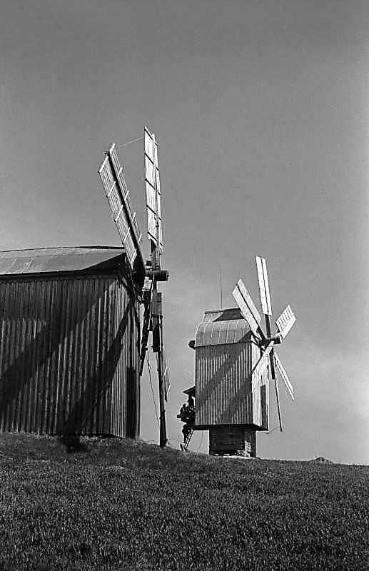 1984 р. Вітряки з Лютенських Будищ і…