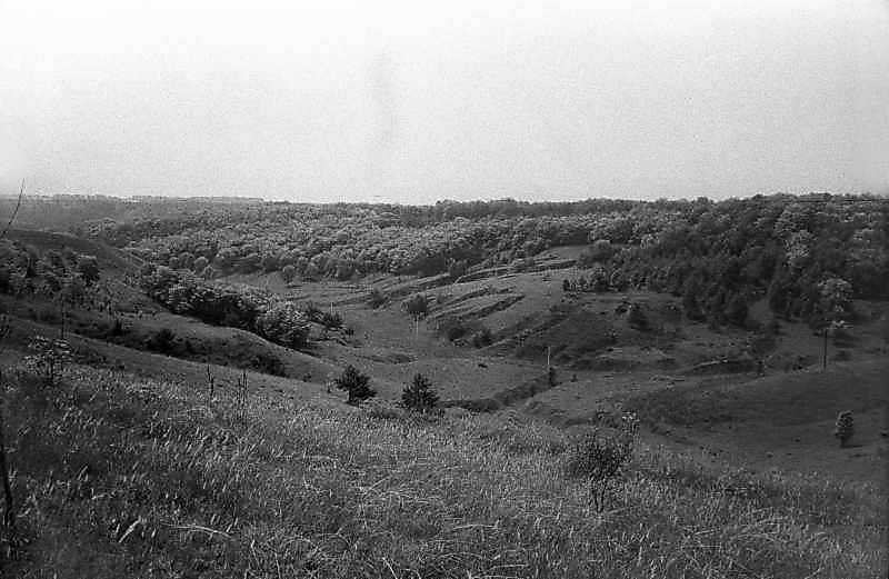 1984 р. Краєвид біля села