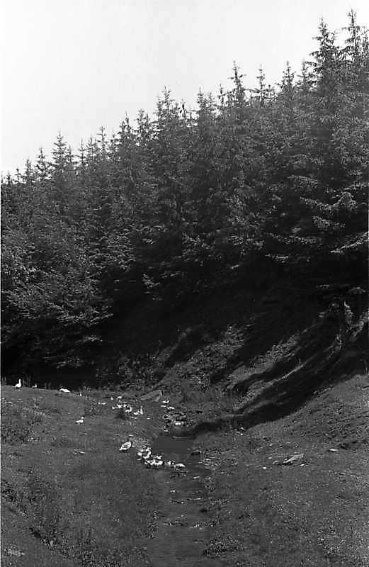 1988 р. Потічок в долині між селами Берем'яни і Жнибороди