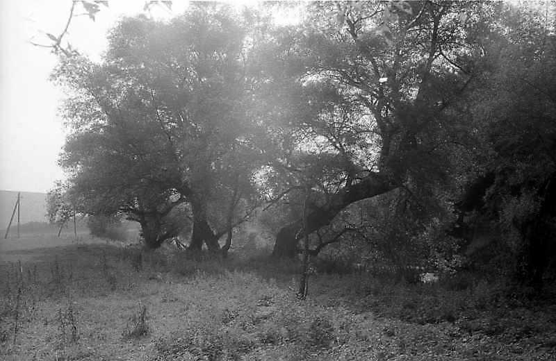 1996 р. Краєвид біля гирла р.Стрипа