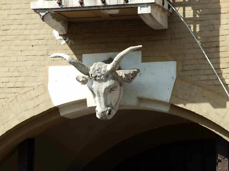 Голова корови