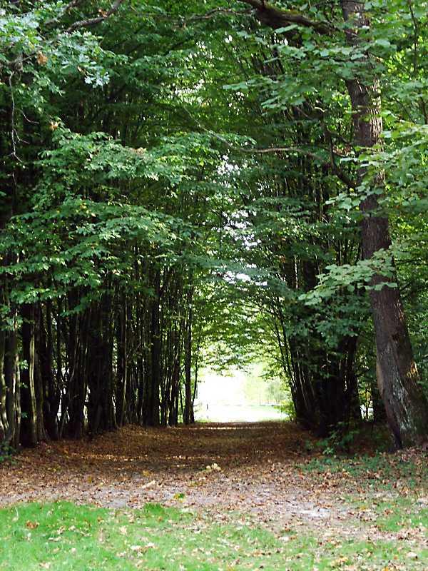 2011 р. Алея у змішаному лісі