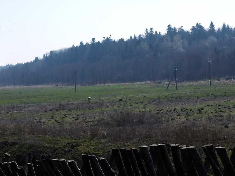 2013 р. Долина і ліс