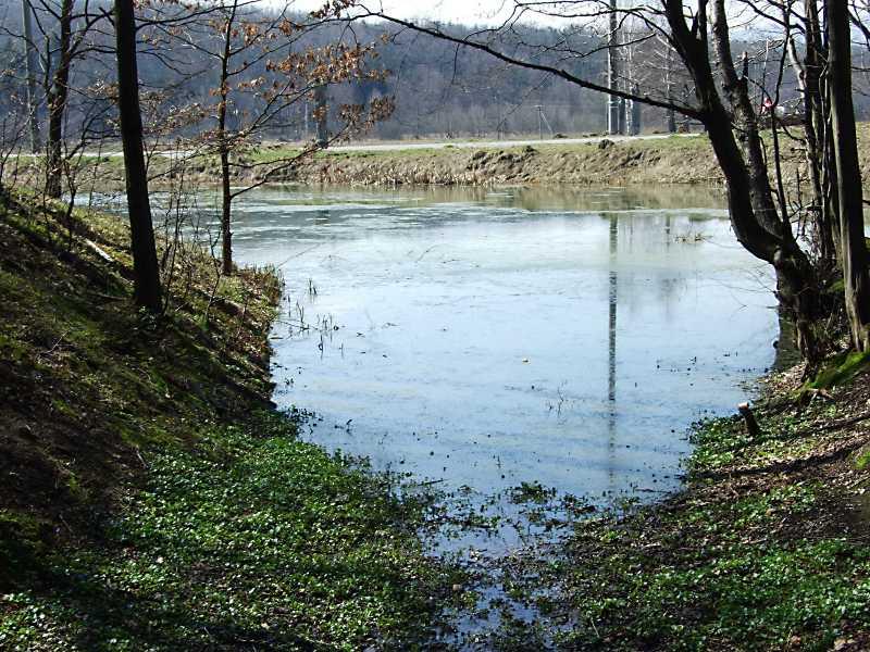 Вид на ставок з лісу
