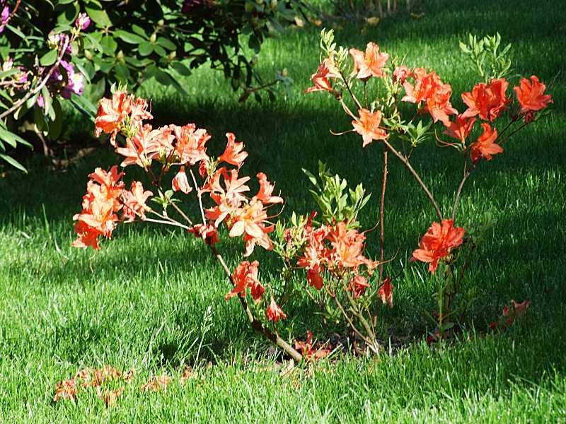 Квіти біля ротонди (21)