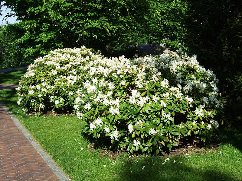 Квітучі кущі біля площадки руїн
