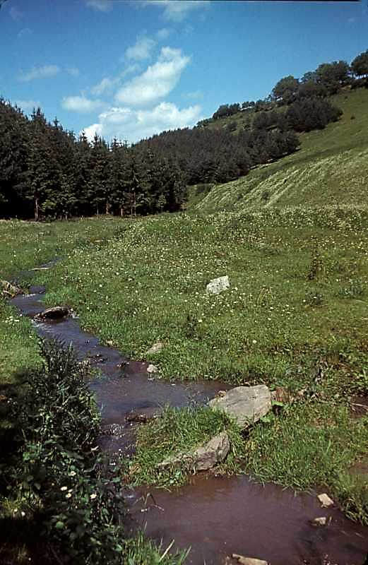 1988 р. Потічок в долині між селами…