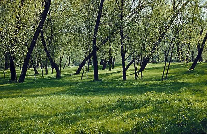 1978 р. Краєвид у Гідропарку