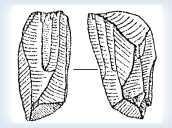 Стоянка пізьнопалеолітична